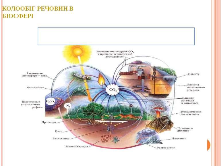 КОЛООБІГ РЕЧОВИН В БІОСФЕРІ Біогеохімічний цикл карбону