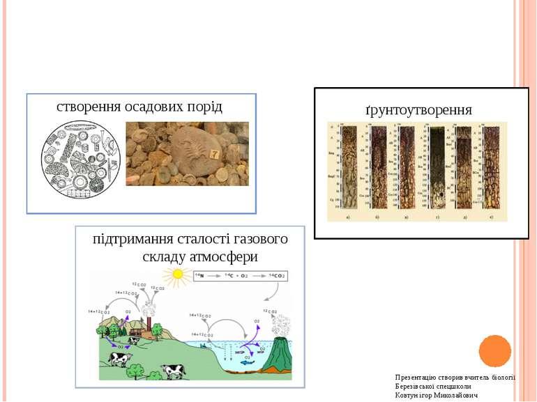 Роль організмів у перетворенні оболонок Землі створення осадових порід підтри...