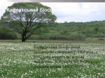 Карпатський біосферний заповідник Карпа тський біосфе рний запові дник створе...