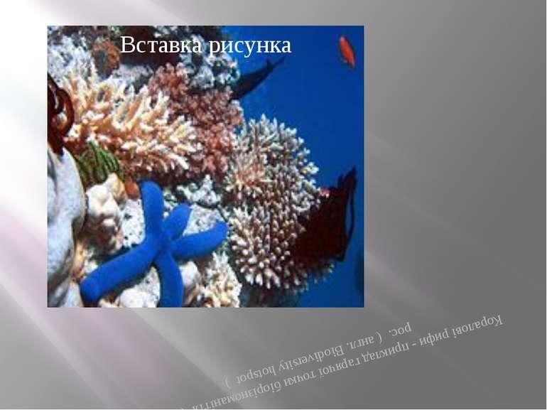 Коралові рифи - приклад гарячої точки біорізноманіття (Англ.) рос. ( англ. Bi...