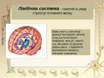 Лімбічна система - сукупність ряду структур головного мозкуБере участь у регу...