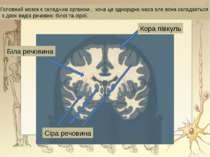 Головний мозок є складним органом , хоча це однорідна маса але вона складаєть...