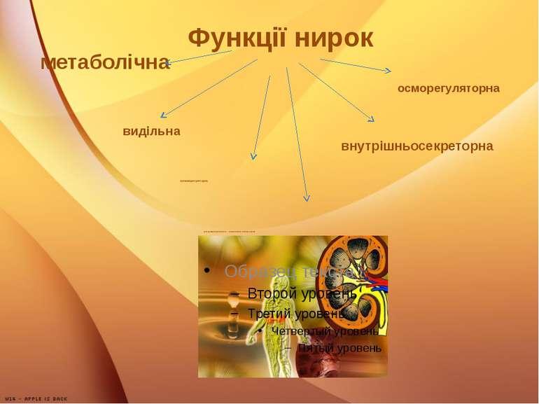 Функції нирок видільна осморегуляторна регуляція кислотно - основного стану к...