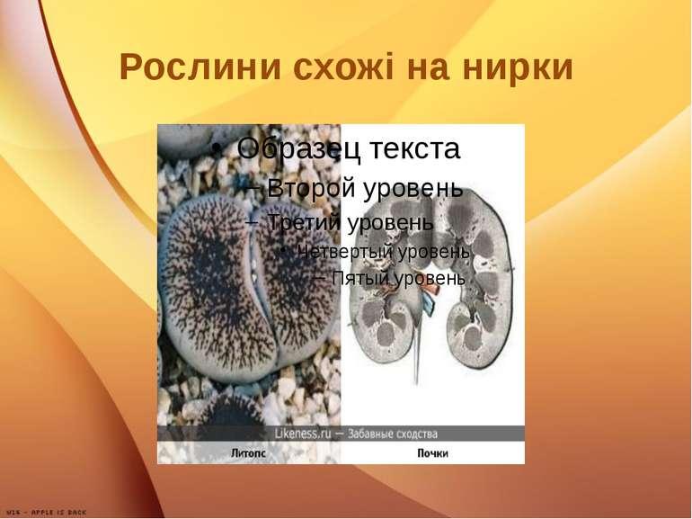 Рослини схожі на нирки