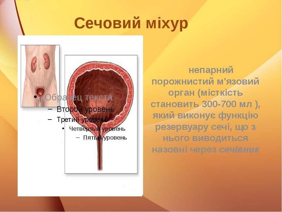 Сечовий міхур непарний порожнистий м'язовий орган (місткість становить 300-70...