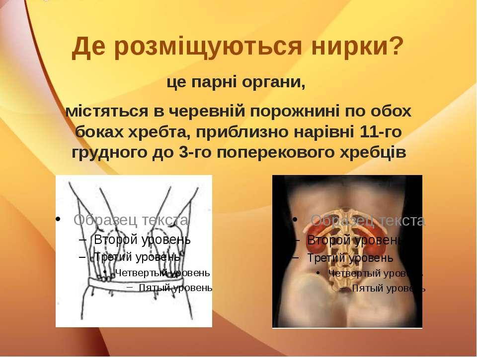Де розміщуються нирки? це парні органи, містяться в черевній порожнині по обо...