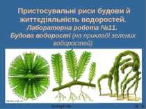 Пристосувальні риси будови й життєдіяльність водоростей. Лабораторна робота №...