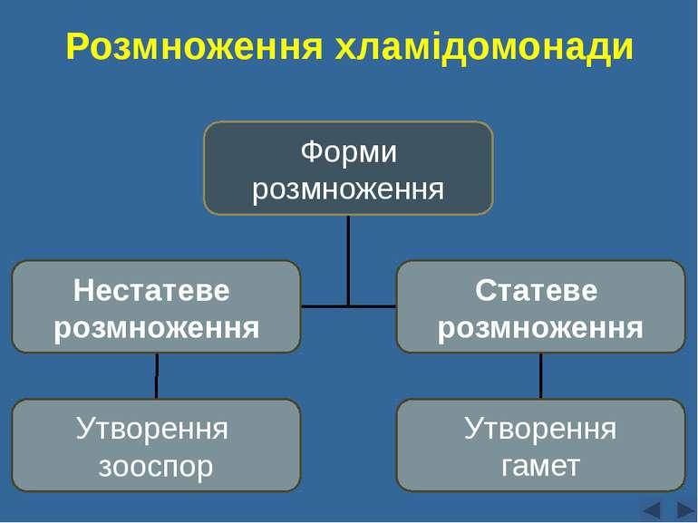 Розмноження хламідомонади Сліпчук І.Ю. Форми розмноження Нестатеве розмноженн...