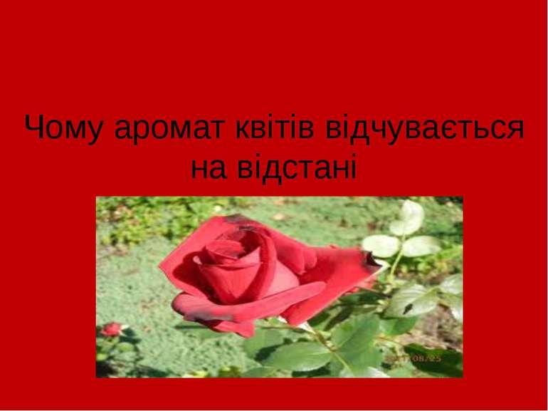 Чому аромат квітів відчувається на відстані
