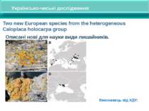 Two new European species from the heterogeneous Caloplaca holocarpa group Опи...