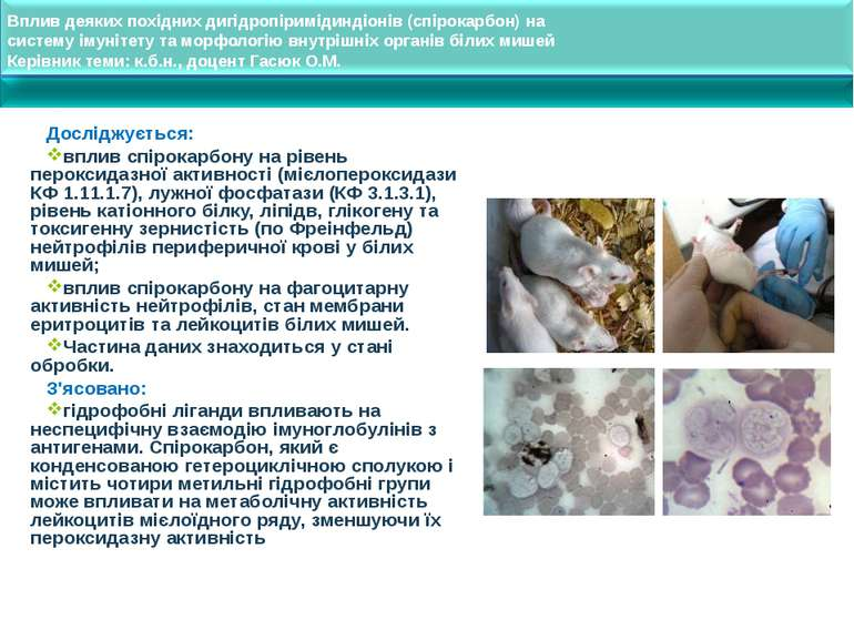 Вплив деяких похідних дигідропіримідиндіонів (спірокарбон) на систему імуніте...