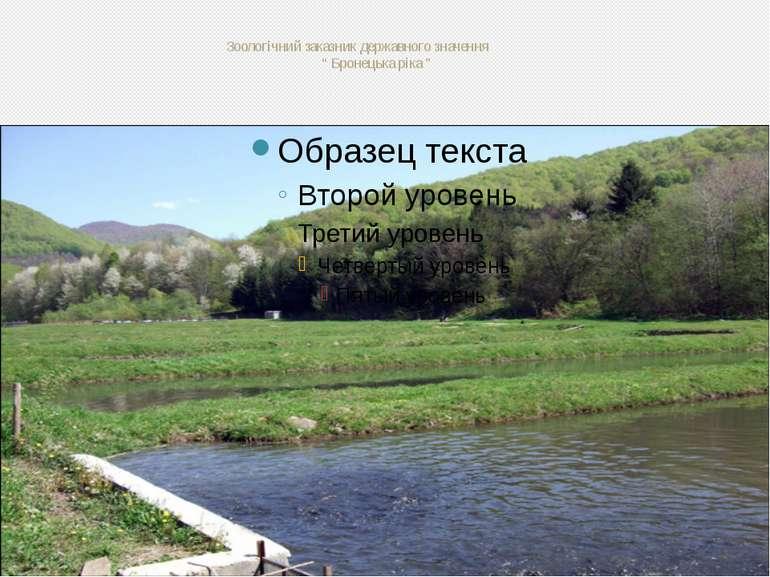 """Зоологічний заказник державного значення """" Бронецька ріка """""""