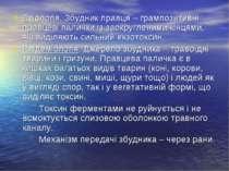 Етіологія. Збудник правця – грампозитивні правцеві палички із заокругленими к...