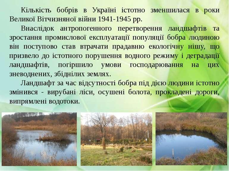 Кількість бобрів в Україні істотно зменшилася в роки Великої Вітчизняної війн...