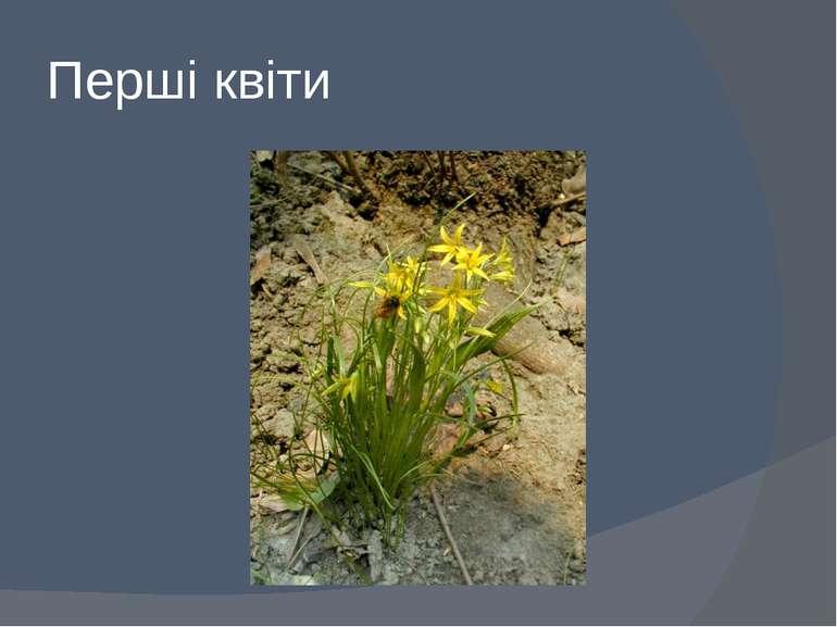 Перші квіти