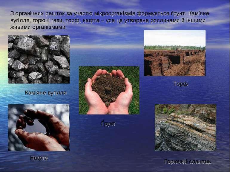 З органічних решток за участю мікроорганізмів формується ґрунт. Кам'яне вугіл...
