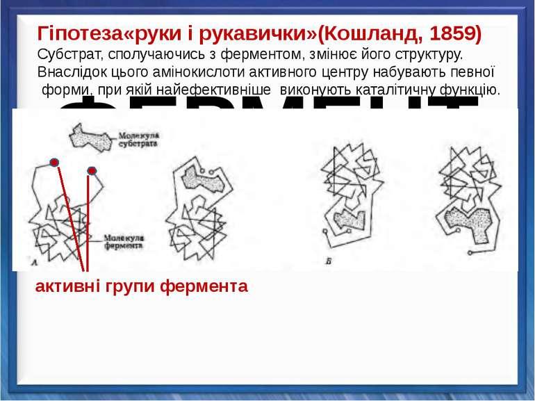 Гіпотеза«руки і рукавички»(Кошланд, 1859) Субстрат, сполучаючись з ферментом,...