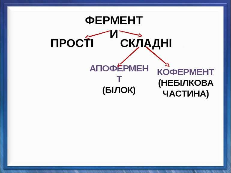 КОФЕРМЕНТ (НЕБІЛКОВА ЧАСТИНА) ПРОСТІ СКЛАДНІ АПОФЕРМЕНТ (БІЛОК) ФЕРМЕНТИ