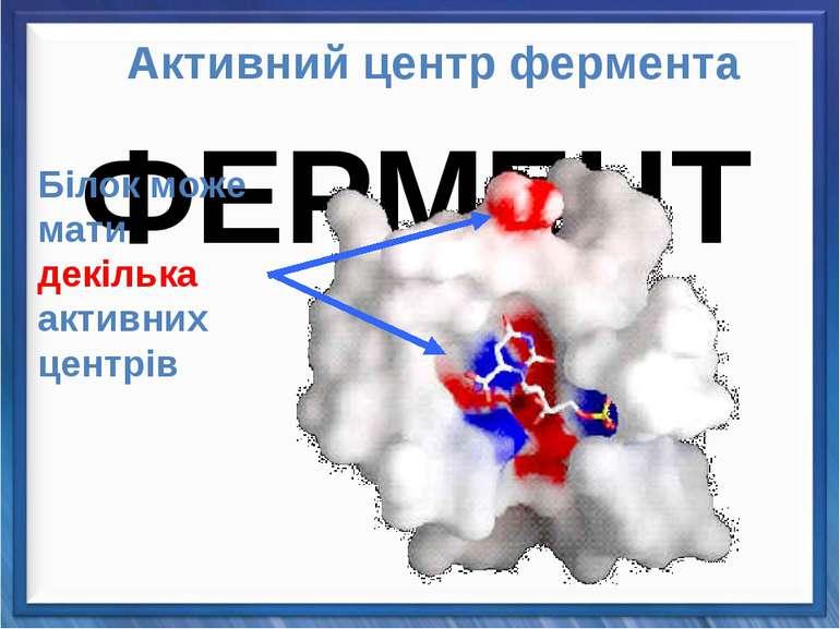 Активний центр фермента Білок може мати декілька активних центрів ФЕРМЕНТИ