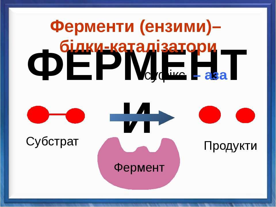 Ферменти (ензими)– білки-каталізатори суфікс – аза Продукти Cубстрат Фермент ...