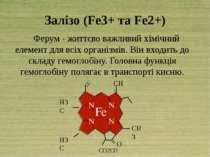 Залізо (Fe3+ та Fe2+) Ферум - життєво важливий хімічний елемент для всіх орга...