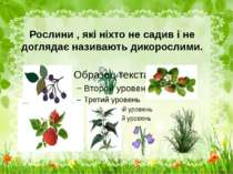 Рослини , які ніхто не садив і не доглядає називають дикорослими.