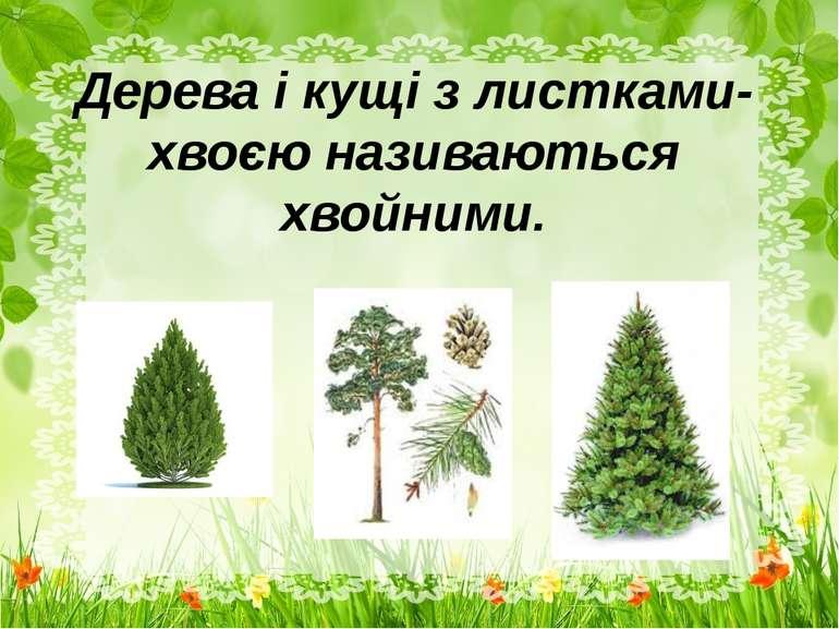 Дерева і кущі з листками-хвоєю називаються хвойними.