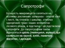 Сапротрофи Більшість макроміцетів селяться на всіляких рослинних залишках - о...