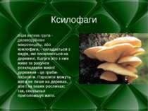 Ксилофаги Інша велика група - дереворуйнівні макромицеты, або ксилофаги, - ск...