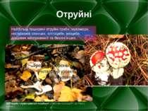 Отруйні Найбільш поширені отруйні гриби: мухомори, несправжні опеньки, клітоц...