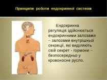 Принципи роботи ендокринної системи Ендокринна регуляція здійснюється ендокри...