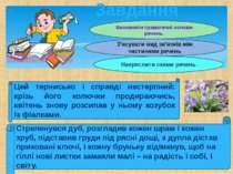 Завдання Визначити граматичні основи речень. З'ясувати вид зв'язків між части...