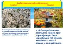 Веснянкуваті вишні-старшокласниці із сонцем кокетують білим цвітом, під ноги ...