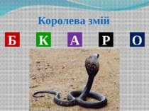 Тварина , яка зимою смокче лапу В Д І Е Ь Д М