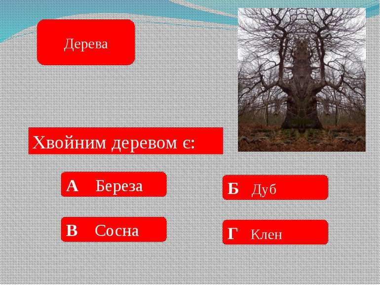 Найвище дерево: А 59 м Б 150 м В 98 м Г 115 м Дерева