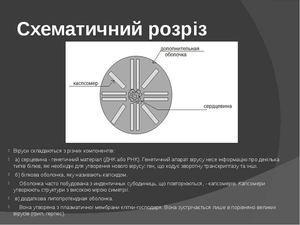 Схематичний розріз Віруси складаються з різних компонентів: а) серцевина - ге...