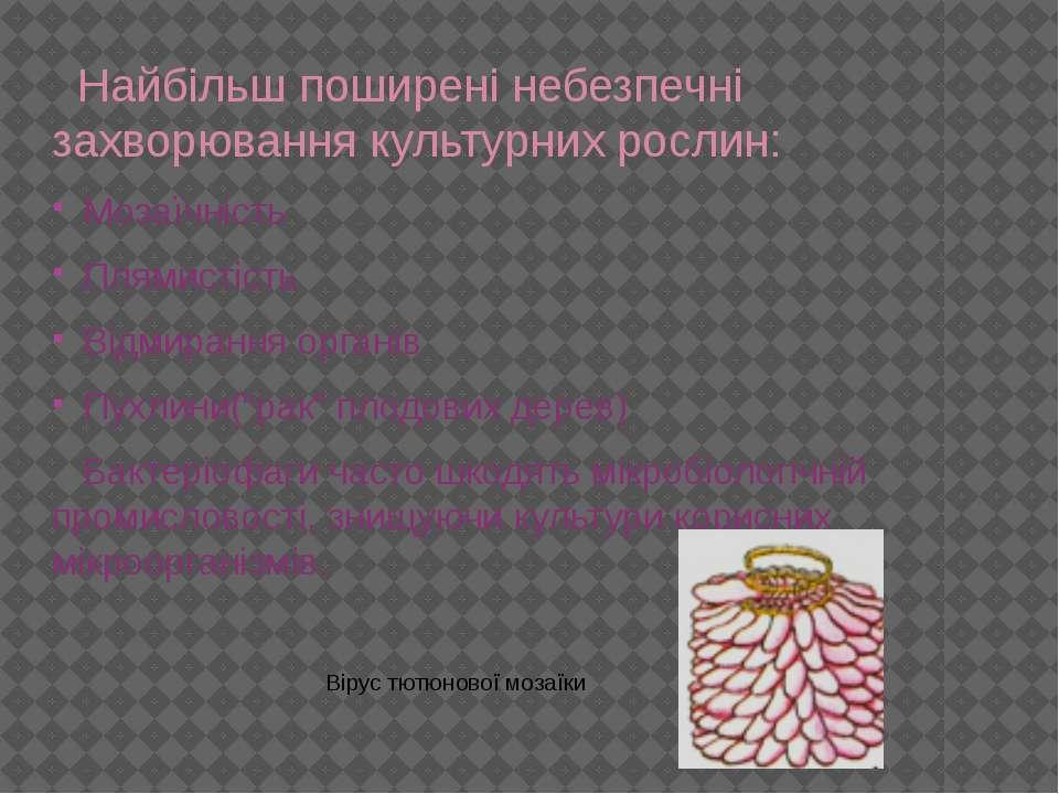 Найбільш поширені небезпечні захворювання культурних рослин: Мозаїчність Плям...