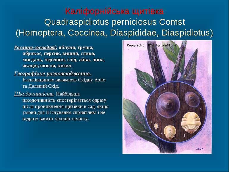 Каліфорнійська щитівка Quadraspidiotus perniciosus Comst (Homoptera, Coccinea...
