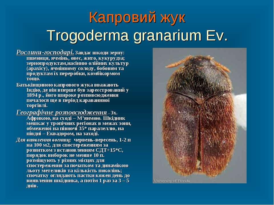 Капровий жук Trogoderma granarium Ev. Рослини-господарі. Завдає шкоди зерну: ...
