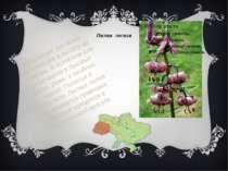 Лилия лесная Многолетнее растение, достигающее в высоту до 1,5 метра. В основ...