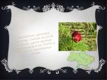 Пион тонколистный Многолетнее цветковое растение. Стебель высотой 10-50 см. Ц...