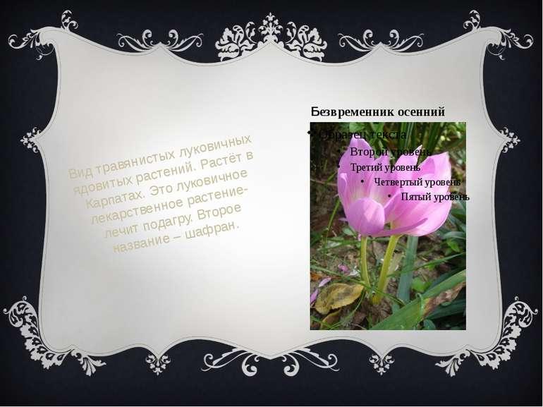 Безвременник осенний Вид травянистых луковичных ядовитых растений. Растёт в К...