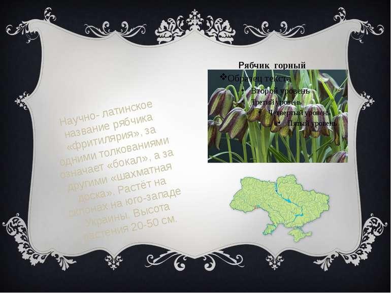 Рябчик горный Научно- латинское название рябчика «фритилярия», за одними толк...