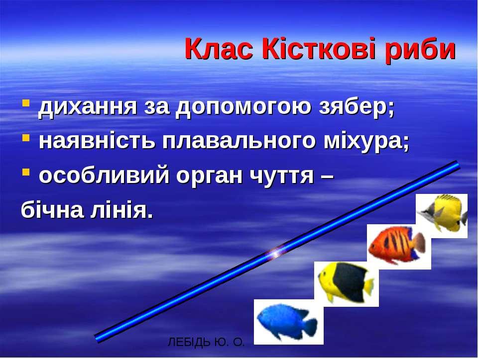Клас Кісткові риби дихання за допомогою зябер; наявність плавального міхура; ...