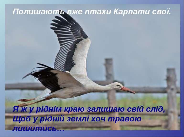Полишають вже птахи Карпати свої. Я ж у ріднім краю залишаю свій слід, Щоб у ...