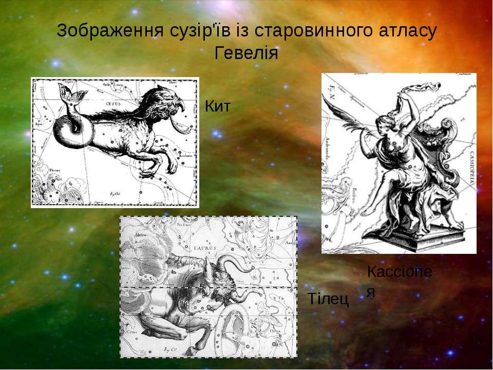 Зображення сузір'їв із старовинного атласу Гевелія Кит Тілец Кассіопея
