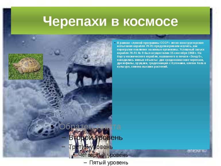 Черепахи в космосі В рамках «місячної програми СРСР» льотно-конструкторські в...