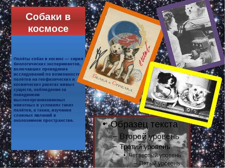 Собаки в космосі Польоти собак в космос - серія біологічних експериментів, як...