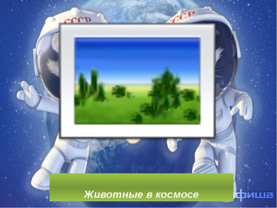 """Тварини в космосі"""