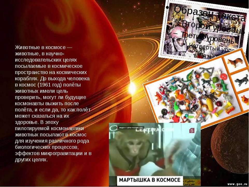 Тварини в космосі - тварини, у науково-дослідних цілях посилають в космос на ...